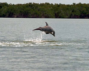 Guided Power Boat Dolphin and Wildlife Tour - Florida Everglades