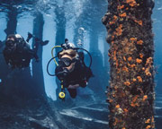 Discover Scuba Diving Palm Beach County - Full Day