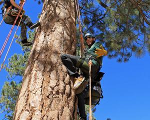 Tree Rope Climbing Big Bear Lake - 3 Hours