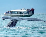 Whale Watching Tour, Juneau - 2.5 Hours