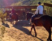 Horseback Riding Phoenix - 2 Hours 30 Minutes