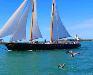 Boston Harbor Day Sail - 2 Hours