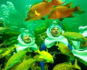 Sea Trek Encounter Miami with Admission to Seaquarium - 20 Minute Underwater Exploration