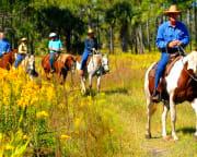 Horseback Riding Orlando, Cattle Drive Adventure - 2 Hours