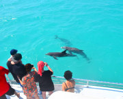 Key West Day Cruise, Dolphin Watch and Snorkel Experience - 3 Hours