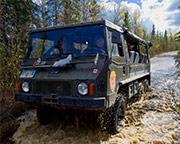 Denali Backcountry Safari - 3.5 Hours