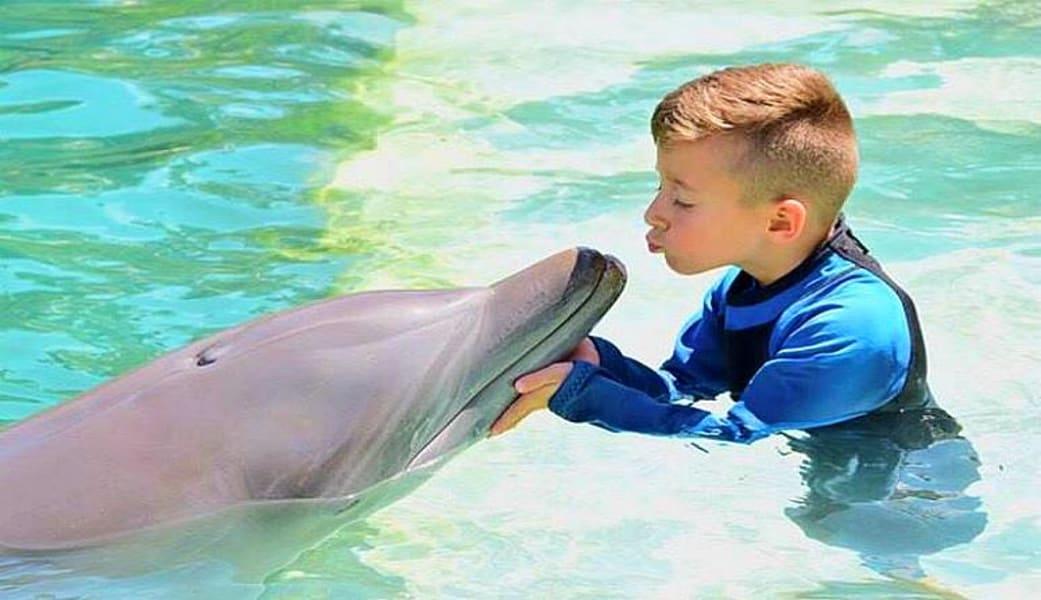 Dolphin Encounter Miami with Admission to Seaquarium - 30 Minute Swim