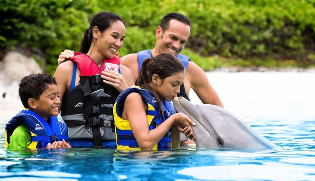 Dolphin_Swim_Adventure_Hawaii_with_Admission_to_Sea_Life_Park__45_Minute_Swim