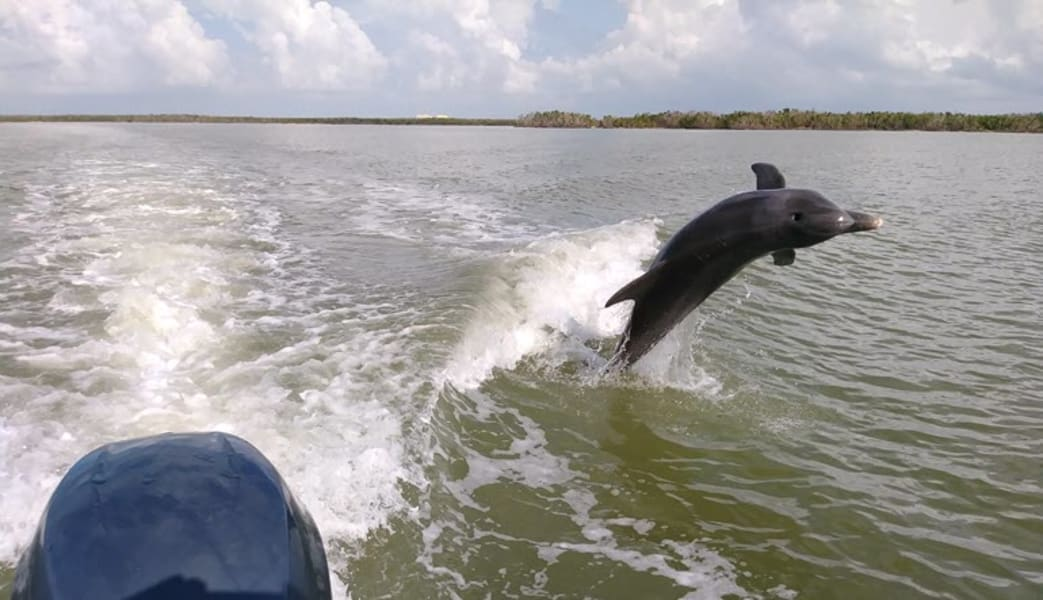 Guided_Power_Boat_Dolphin_and_Wildlife_Tour_-_Florida_Everglades