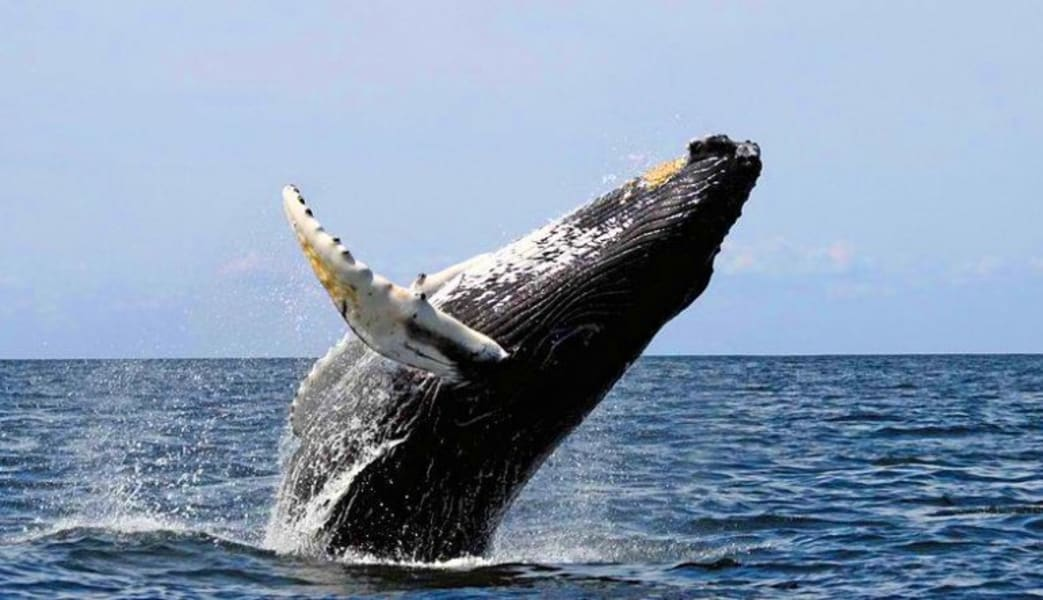 Whale_Watching_Tour_Oahu_North_Shore__2_Hours
