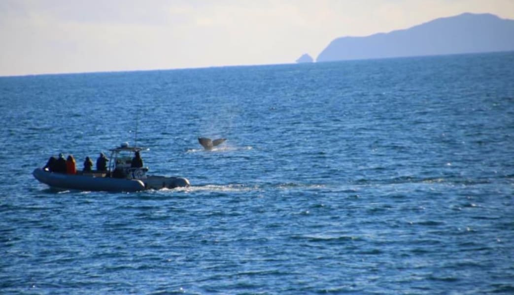Summer_Whale_Watching_Cruise_San_Diego_-_4_Hours