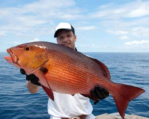 Deep Sea Fishing Charter Miami - up to 6 people, 6 Hours