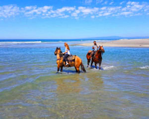 Horseback Riding Santa Cruz, Hecker Pass - 2.5 Hours