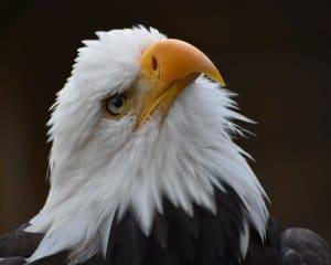 Rain Forest Sanctuary, Totem Park and Eagles Walking Tour - 2.75 Hours
