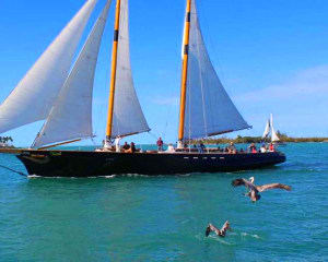 Key West Classic Day Sail - 2 Hours