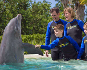 Dolphin Encounter Miami with Admission to Seaquarium - 30 Minute Swim