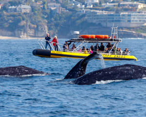 Zodiac Whale Watching Tour, Dana Point - 2 Hours