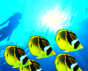 Big Island Catamaran Tour, Kona Snorkel and Dolphin Tours, 4.5hr