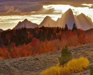 Jackson Hole Summer & Fall Wildlife Sunset Safari, Grand Teton National Park - Half Day