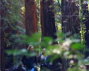 San Francisco Luxury Coach Tour, Muir Woods National Monument - 3 Hours 30 Minutes