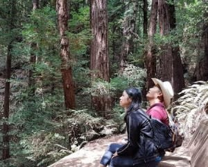 Muir Woods and Wine Country Tour, San Francisco - Half Day