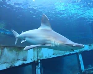 Shark Encounter Adventure Tour Oahu - 7 Hours with Luxury Transportation