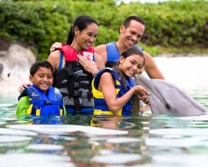 Private Dolphin Swimming Adventure Tour Oahu with Luxury Transportation