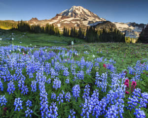 Bus and Walking Tour Seattle, Mt. Rainier National Park - Full Day