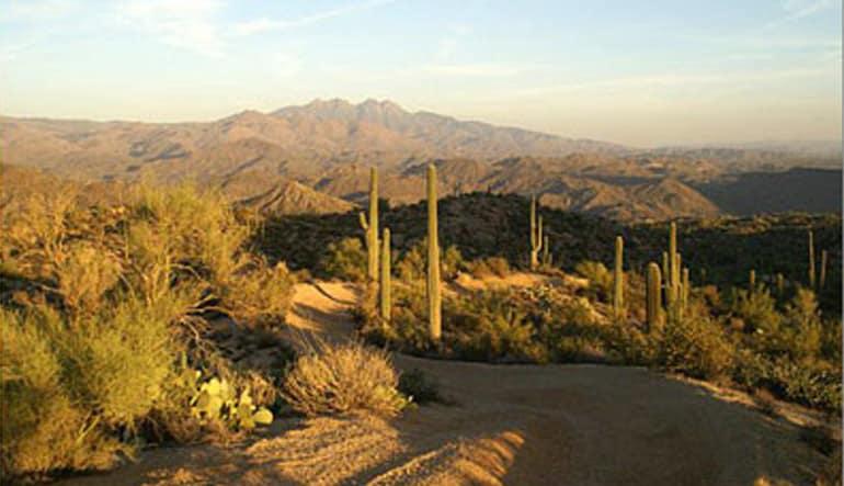 Phoenix Dune Buggy Landscape