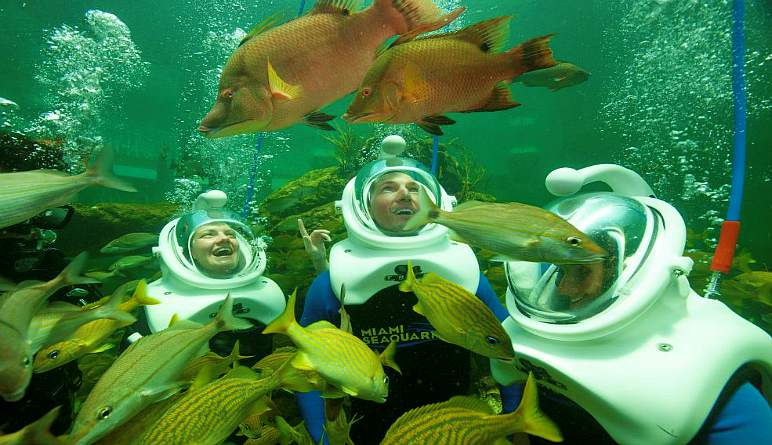 Sea Trek Encounter Miami with Admission to Seaquarium - 20 Minute Underwater Exploration