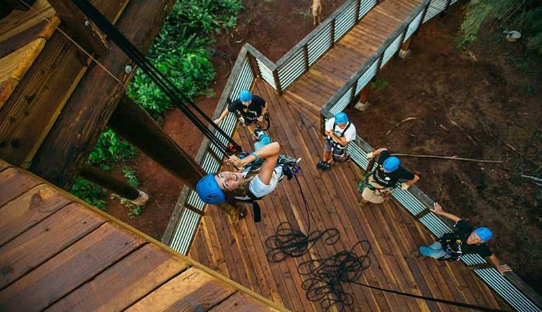 Zipline Oahu Looking Up