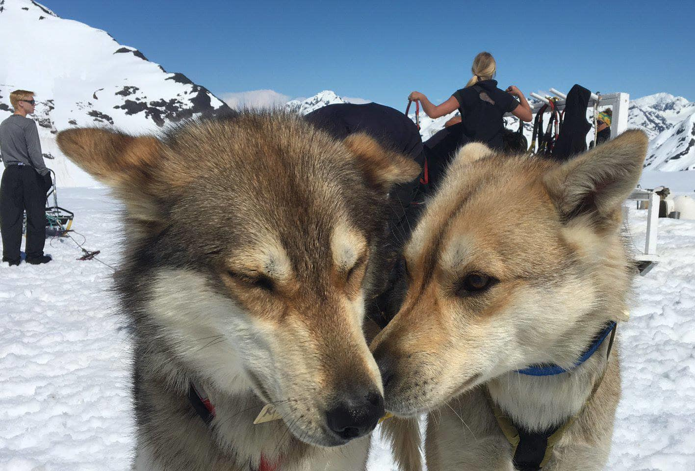 Dog Sled Ride Alaska with Helicopter Flight, Anchorage, 1hr 45min