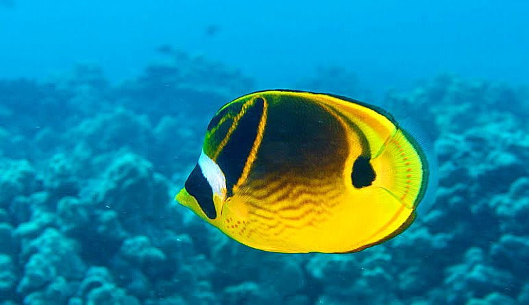 Discover Scuba Diving Oahu Fish
