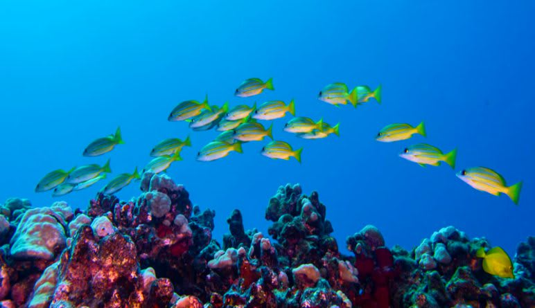 Discover Scuba Diving Oahu Fishes