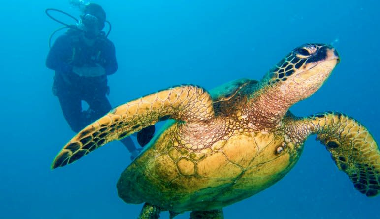 Discover Scuba Diving Oahu Turtle