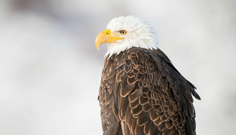 Jackson Hole Full Day Safari Eagle