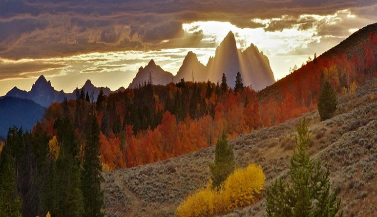 Jackson Hole Summer & Fall Wildlife Sunset Safari