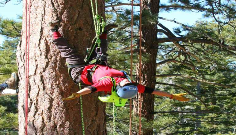 Tree Rope Climbing Big Bear Lake - 3 Hours
