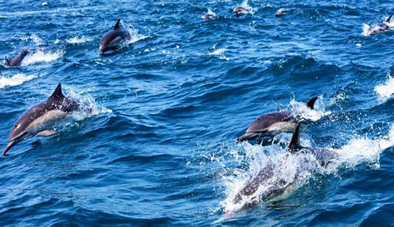 Whale and Dolphin Watching Tour, San Diego - 3 Hours