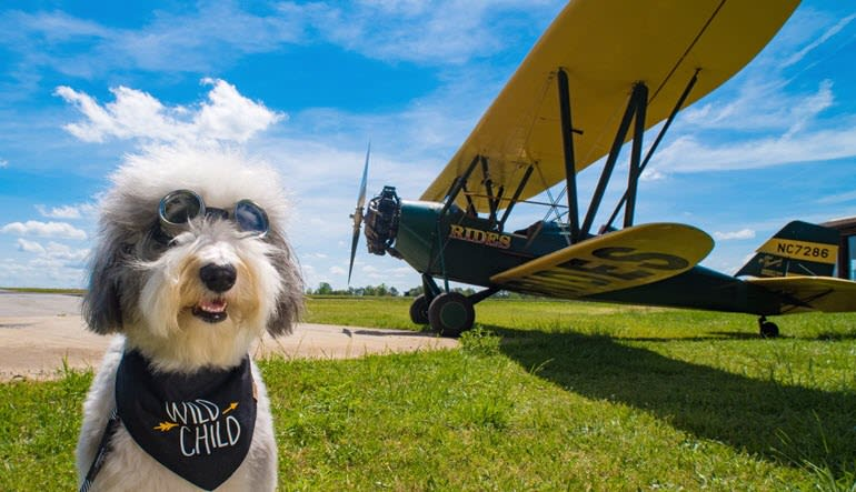 Biplane Ride Atlanta Mascot Dog