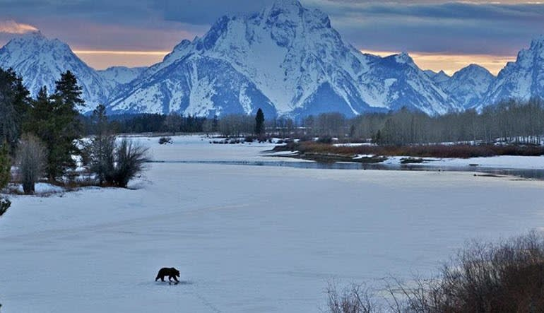 Jackson Hole Winter Wildlife Sunset Safari