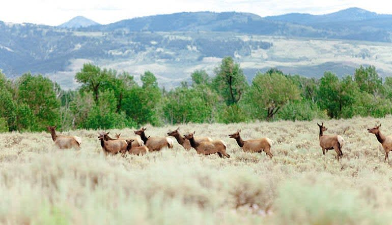 Jackson Hole Summer & Fall Wildlife Sunrise Safari, Grand Teton National Park - Half Day