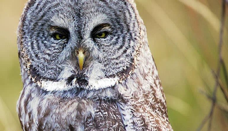 Jackson Hole Wildlife Full Day Safari Owl