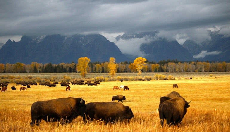 Jackson Hole Summer & Fall Wildlife Sunset Safari Animals