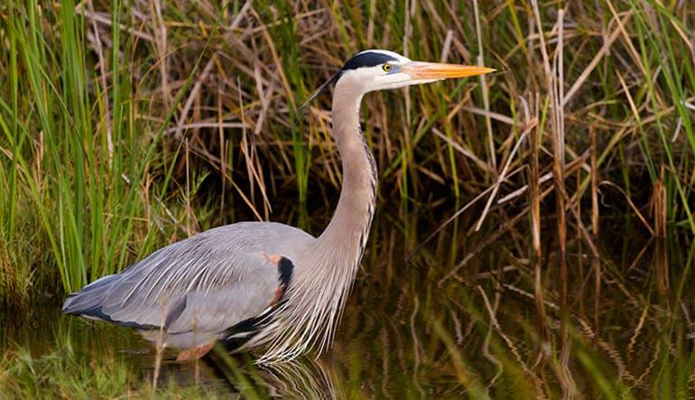 Airboat Swamp Tour Bird