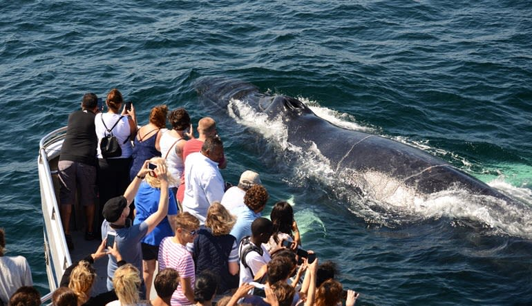 Whale Watch Tour Boston Close