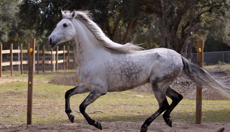 Horseback Riding Orlando