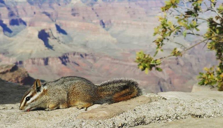 Grand Canyon National Park Luxury Bus Tour Wildlife