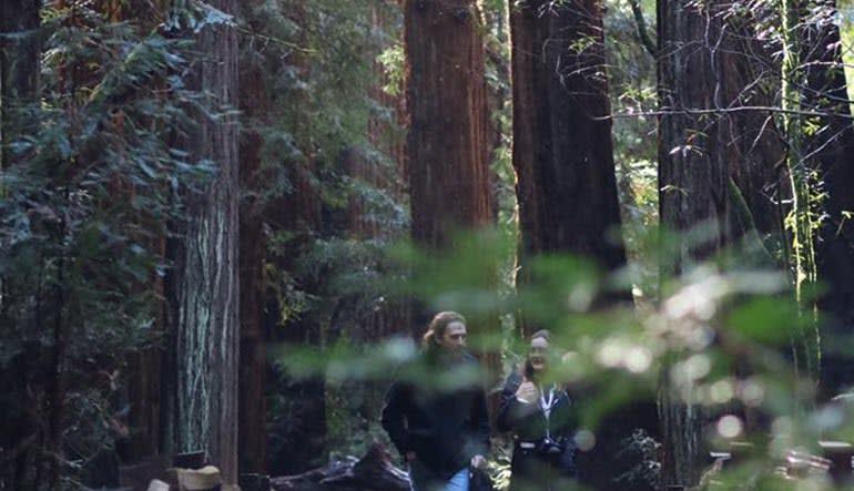 San Francisco Luxury Coach Tour Muir Woods Stroll