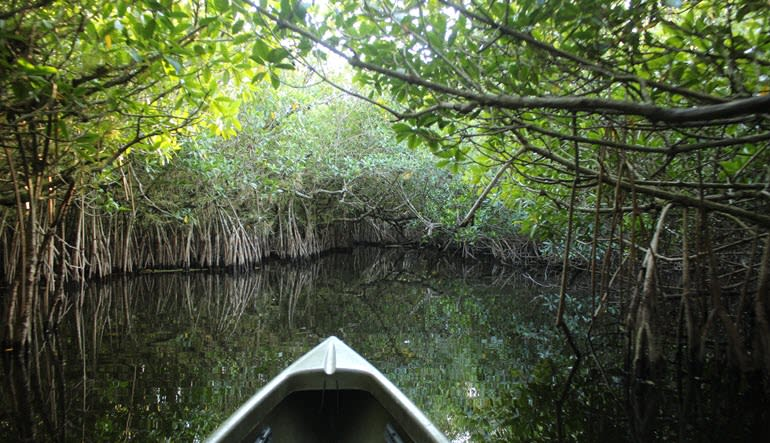 Kayak or Canoe Eco Tour, Mangrove Tunnel - 3 Hours